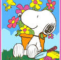 Spring pic Snoopy